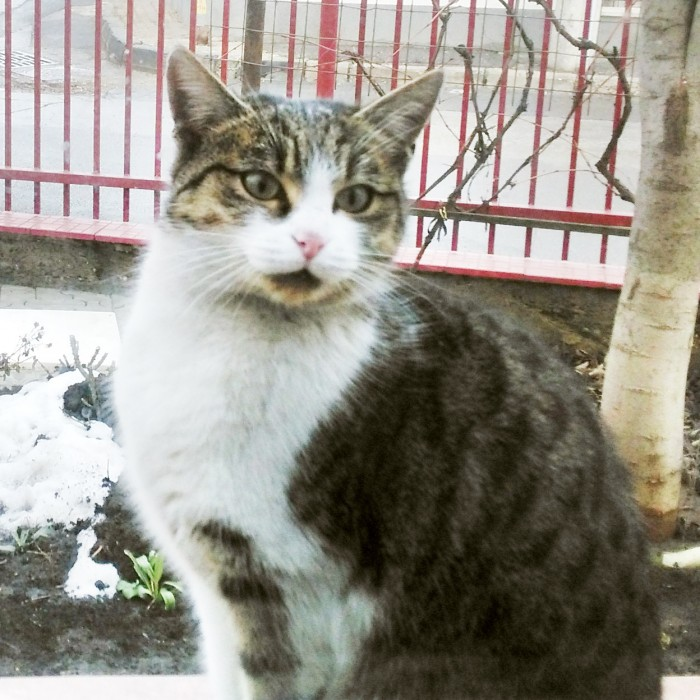 "Pisica ""Soricel"""